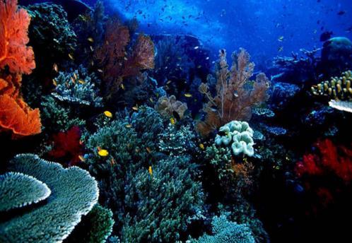 Diving Di Bunaken