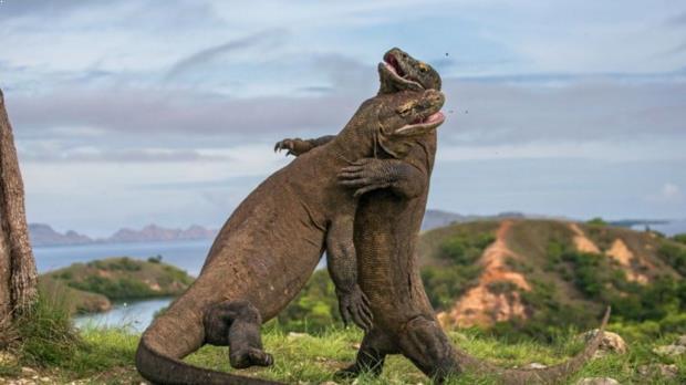 Foto Pulau Komodo