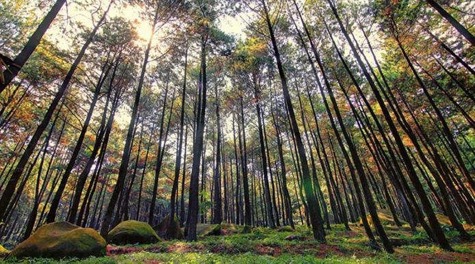 Foto Tempat Wisata Taman Wisata Alam Gunung Pancar