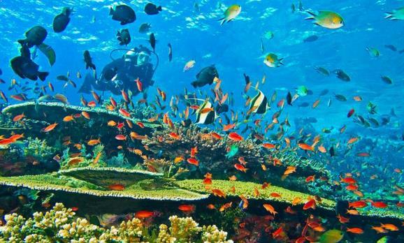 Gambar Alam Bawah Laut Raja Ampat