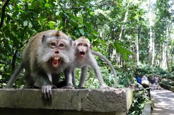 Gambar Hutan Monyet Pusuk