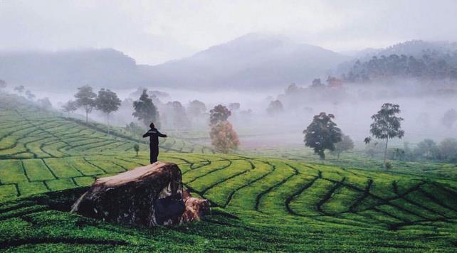 Foto Perkebunan Teh Rancabali