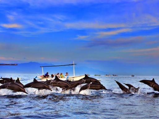 Menikmati Indahnya Lumba-lumba di pantai lovina bali