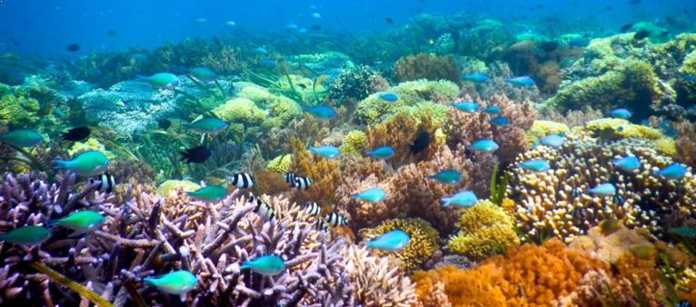 Paket Snorkeling Gili Trawangan