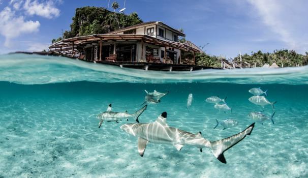Paket Tour Pulau Misool Raja Ampat