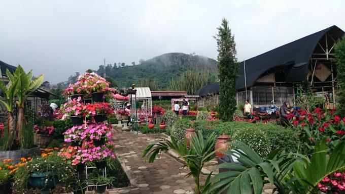 Gambar Taman Begonia Lembang bandung