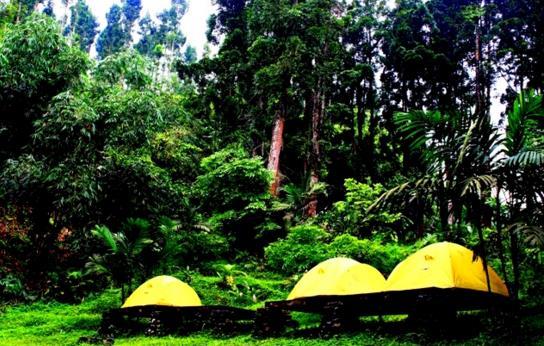 explore Baturaden adventure Forest