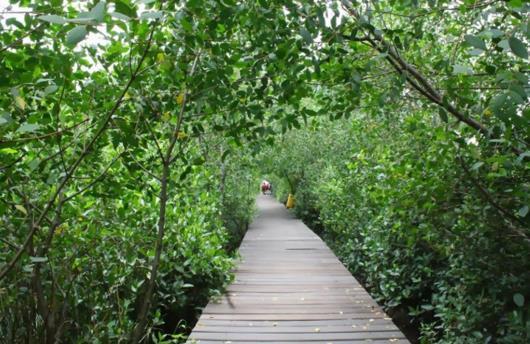 wisata pantai mangrove medan