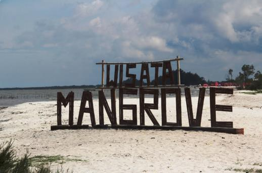wisata pantai mangrove