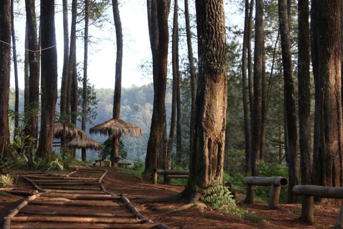 Lokasi Hutan Pinus PAL 16