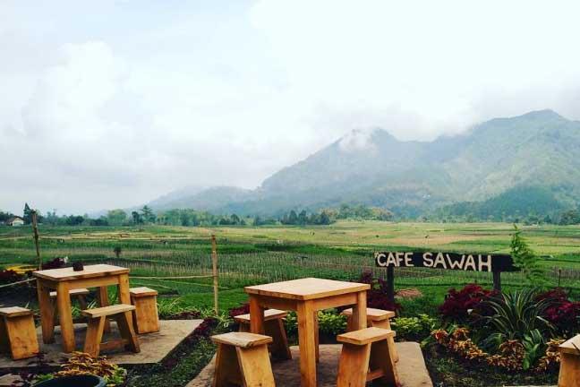 Gambar Pupuk Bawang Cafe