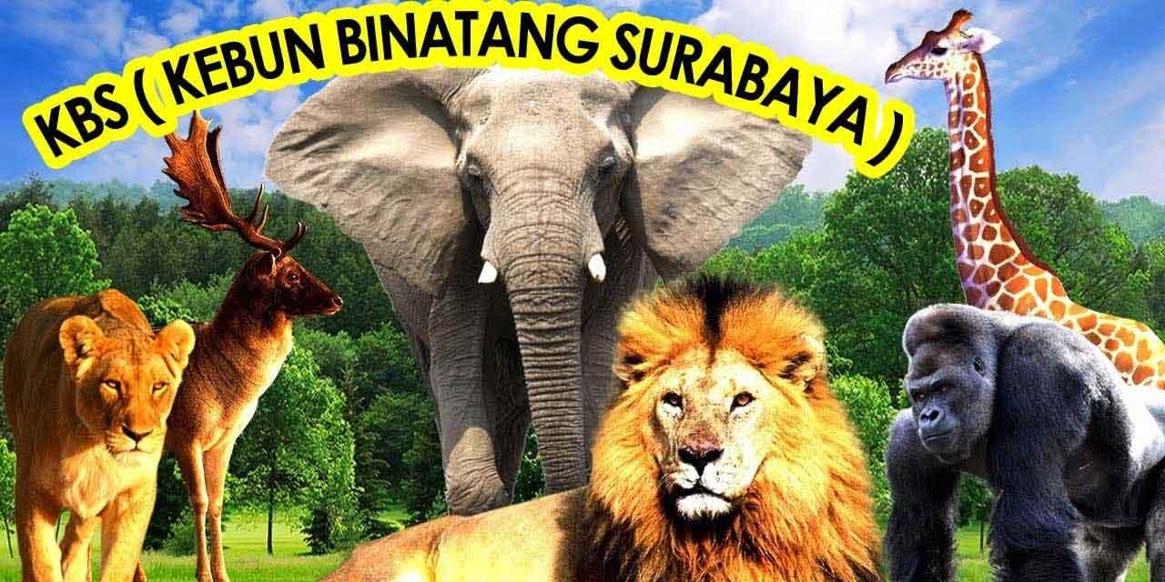 Bonbin Surabaya