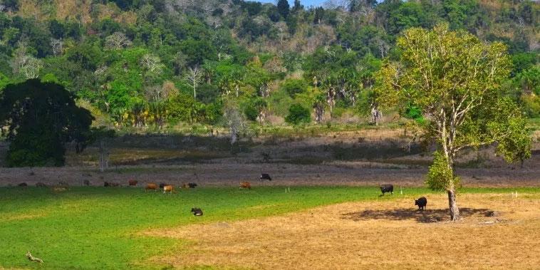 Sadengan Banyuwangi