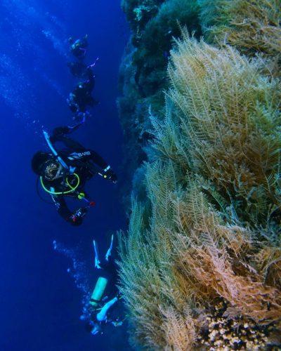 Teluk Tomini Gorontalo