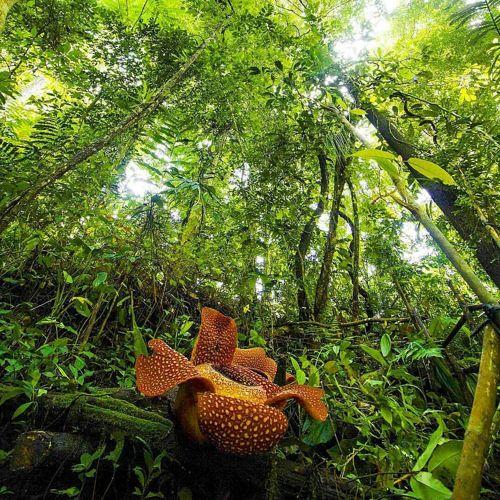 Hutan Lindung Bukit Daun Bengkulu