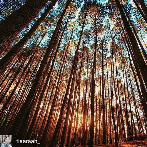 Hutan Pinus Gemaharjo
