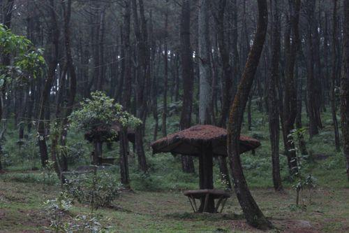 Hutan Pinus Pasir Langlang