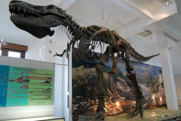 Fosil di Museum Geologi Bandung