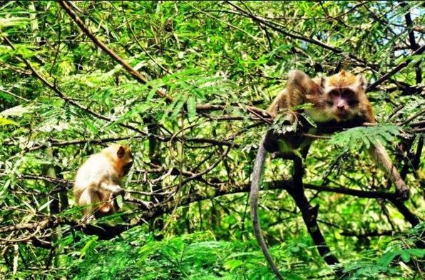 Foto Hutan Monyet Pusuk