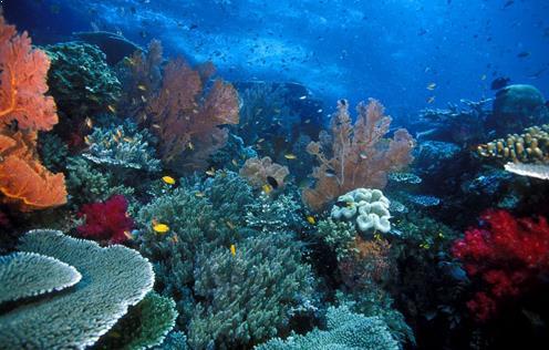 Gambar Alam Bawah Laut Pulau Wayag