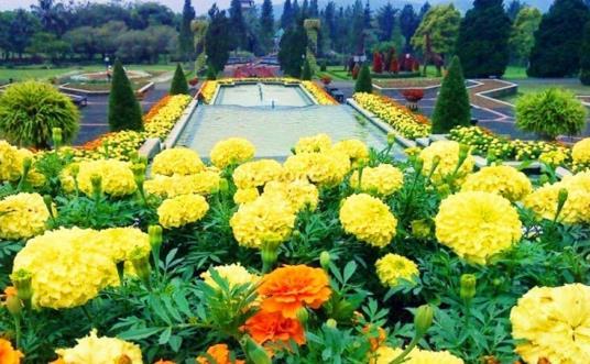 Gambar Wisata Taman Bunga Nusantara