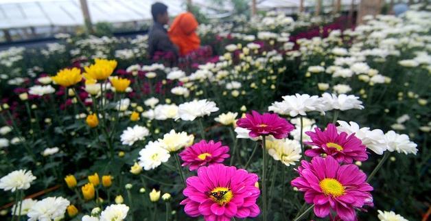Gambar taman Bunga Bandungan