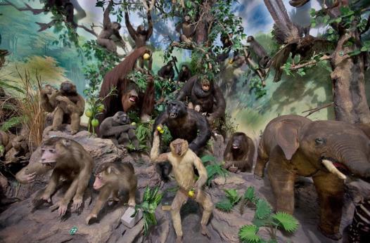 Tempat Wisata Edukasi Rahmat International Wildlife Museum dan Gallery