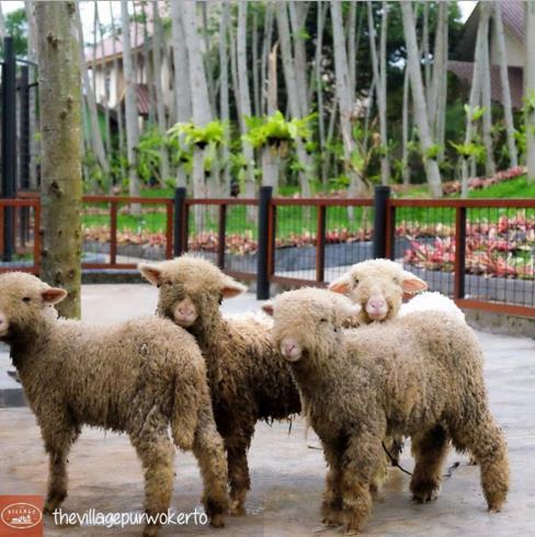 Wisata Baru The Village Purwokerto