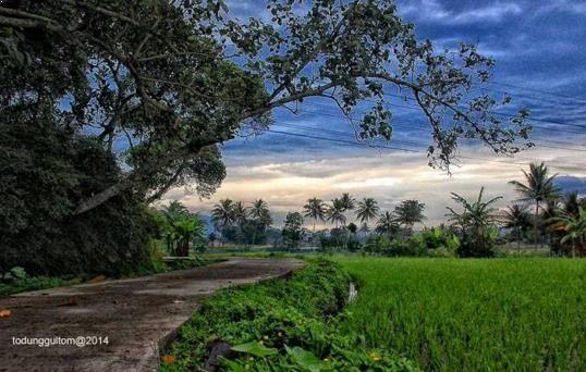gambar Wisata Desa Tingkir Lor
