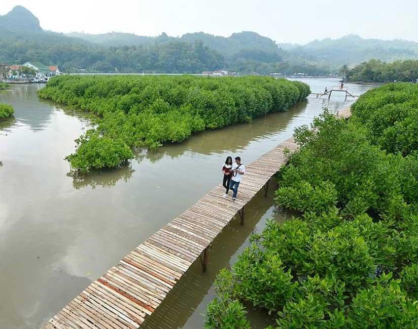 Gambar Hutan Mangrove Logending