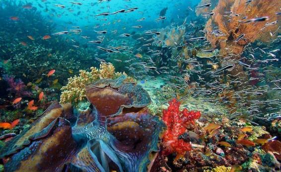 Gambar Taman Laut Taka Bonerate