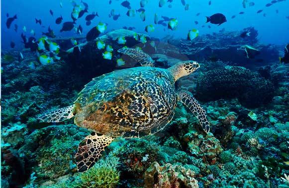 Gambar Taman Nasional Teluk Cendrawasih
