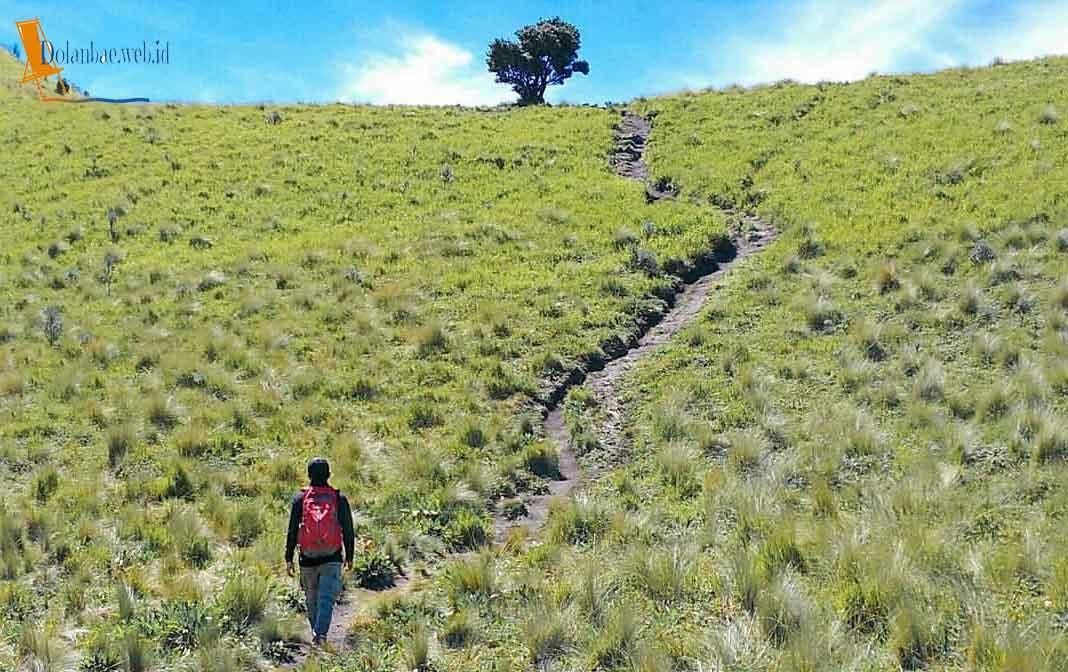 Foto Jalur Pendakian Gunung Merbabu