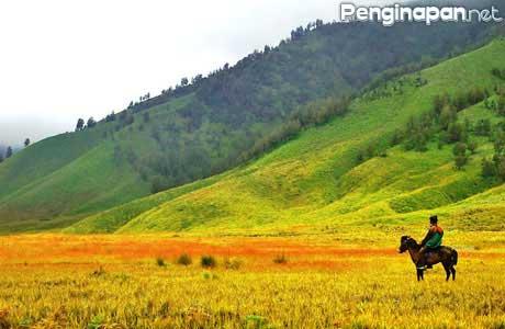 Gambar Padang Savana Gunung Bromo