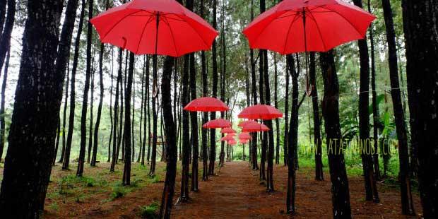 Rumah Pohon Songgon