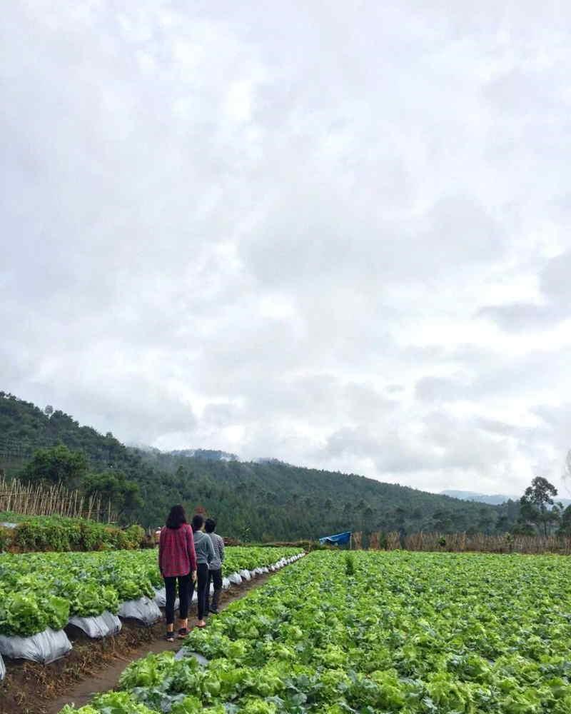 Desa Wisata Kampung Pasir Angling