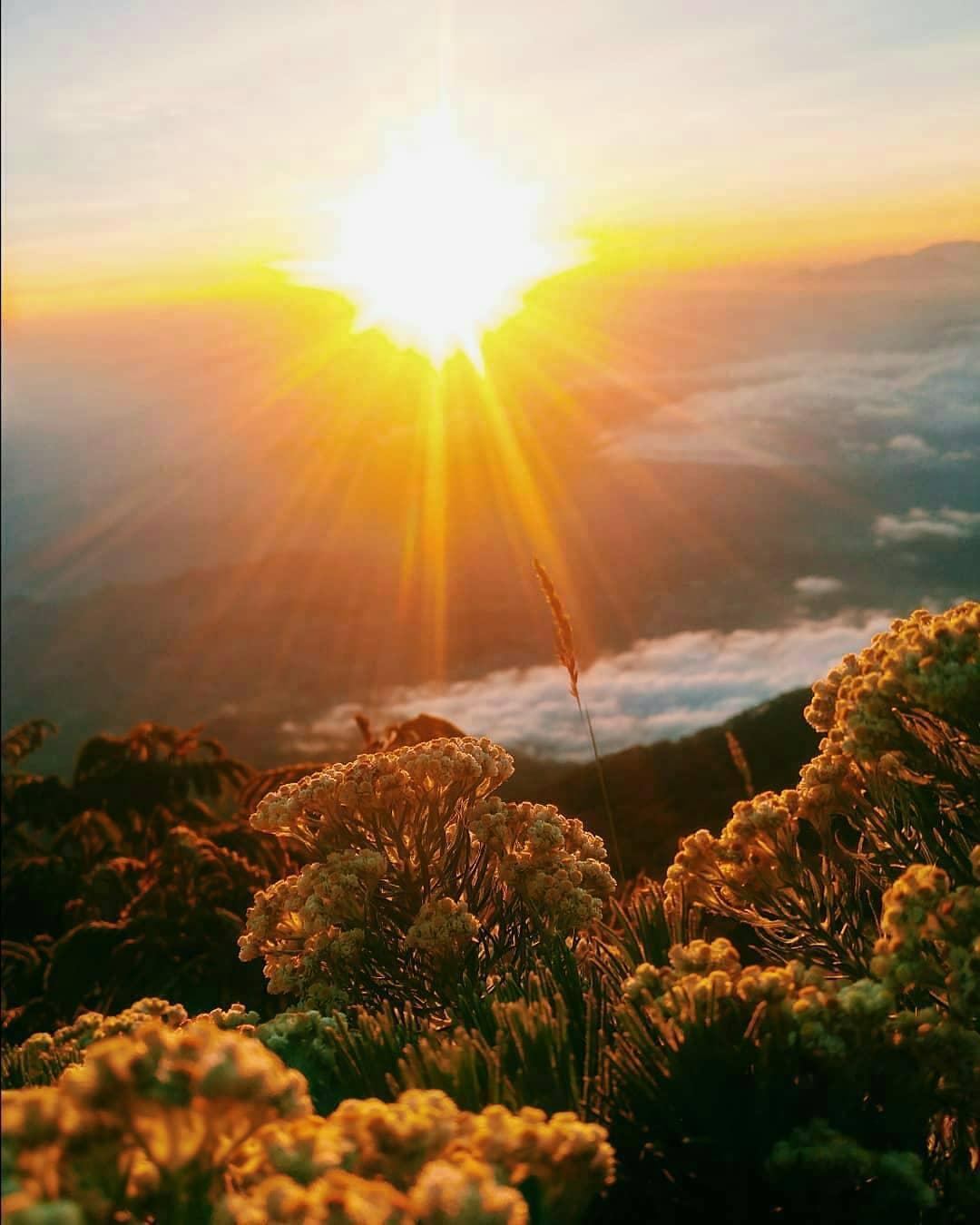 blog pendakian gunung semeru