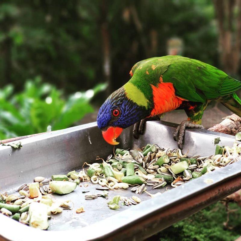 Tiket Kebun Binatang Gembira Loka Jogja