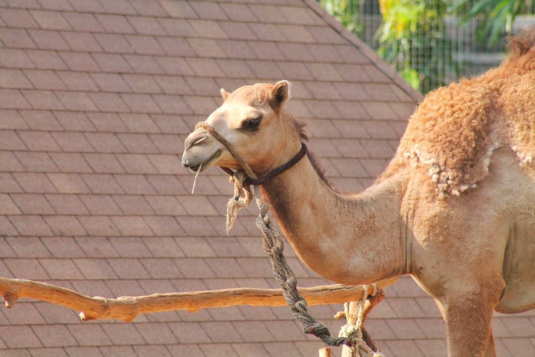 Video Gembira Loka Zoo Jogja