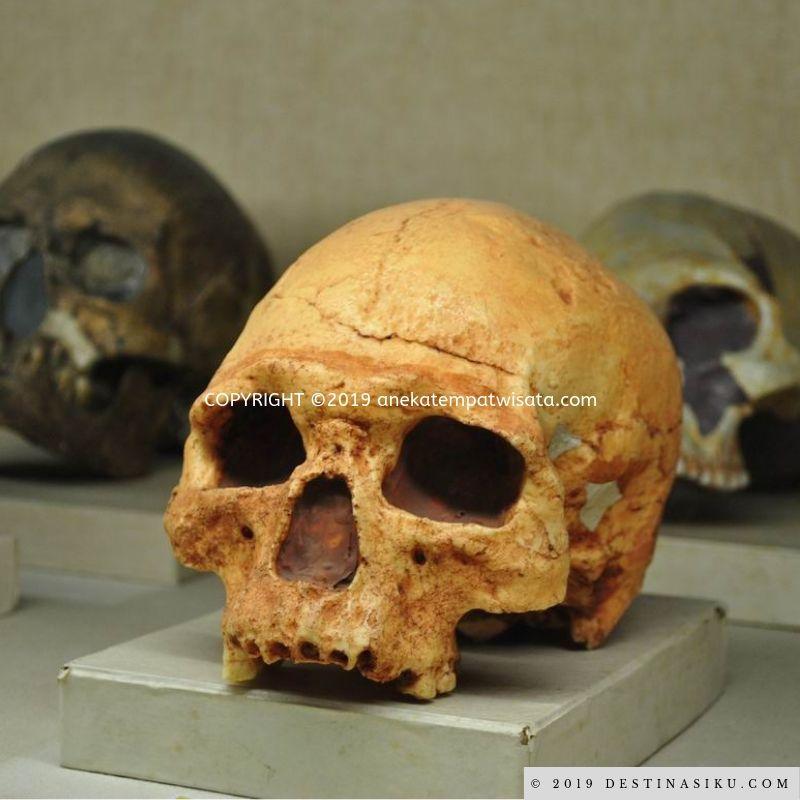 museum geologi ugm