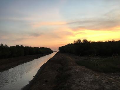 Hutan Mangrove Pantai Sambilawang