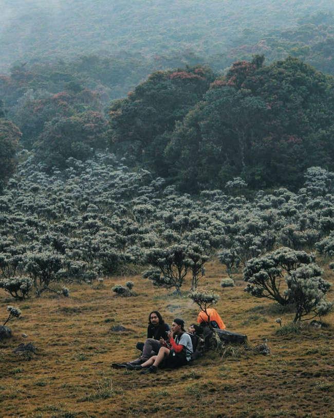 Informasi Gunung Gede Pangrango